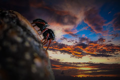 Fearless (learnliveinspire) Tags: spider insect composite nature wildlife beauty love life macro macros photography photoshop learning colors sky cloud clouds sunset mountain fearless bug bugs animals animal