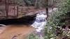 Red River Gorge - Rock Bridge Trail - Wolfe County, Kentucky, USA - April 1, 2017-2-mod (mango verde) Tags: rockbridgetrail redrivergorge wolfecounty kentucky usa