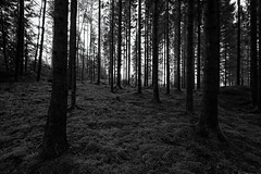Black & White Forest Light (Khanghoang2003) Tags: 2017 canonef1635f4lisusm canoneos6d färgelanda kullberg landskap mossa natur skog svartvitt träd vinter lillesäter västragötalandslän sverige se