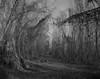 (santoni.matteo) Tags: cameraview bancoottico fomapan100 italianphotographers blackwhite biancoenero nature paesaggioitaliano fiume po vegetazione 4x5 10x12 italy italianlandscape fineartphotography fotografiacontemporanea