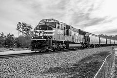 NS 55E at Dallas (travisnewman100) Tags: norfolk southern train railroad freight unit grain empty solo emd sd70m georgia division atlanta north district ns dallas 55e black white