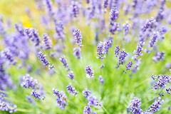 Texture in nature (icemanphotos) Tags: summer meadow dof magical nature texture pattern