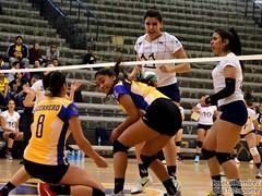Pumas UNAM vs Tigrillas UANL - LMV 2018 (EsTuDeporte) Tags: estudeporte deporte estudiantil universitario amateur sports college mexico voleibol femenil women volleyball ligamexicanadevoleibol lmv 2018 pumas unam tigres uanl