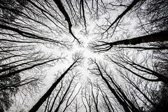 LOST IN THE FOREST. (dani-daniel) Tags: bw black white blackwhite trees sky 8mm fisheye samyang uk england lake district