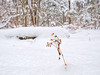 Tatterdemalion (Wicked Dark Photography) Tags: wisconsin forest forestfloor microscape nature snow weed winter woods