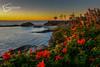 DSC_0922-Oil-FAce (gregoryschafferphotography) Tags: gregoryschafferphotography godspaintbrush gregoryschaffer lagunabeach ocean oceanscape blessedtosee beach