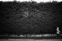 It grows and grows (stefankamert) Tags: stefankamert hedge street blackandwhite blackwhite noir noiretblanc sony rx1 rx1r fullframe mirrorless people