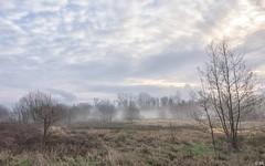 Misty Morning (Martine Lambrechts) Tags: morning misty landscape nature tree winter