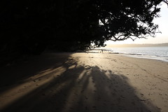 IMG_1863 (Daniel Menzies) Tags: beach canon80d canon18135mm sunset shadow tree sand ocean light landscape