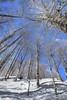 Fin lassù (Maurizio Belisario) Tags: albero tree neve snow montagna mountain terminillo rami prospettiva inverno winter