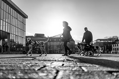(AlphaAndi) Tags: mono monochrome menschen menschenbilder leute personen people portrait urban trier tiefenschärfe wow sony streets streetshots streetshooting streetportrait hunde dogs animals dof vollformat city