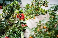 Smithsonian Garden (Robchaos) Tags: washington dc washingtondc smithsonian usa nationscapital washingtonmonument districtofcolumbia schneiderkreuznach schneiderkreuznach135f4 retina telexenar xenar vintage oldlens dklmount