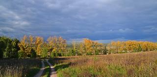 Overlook at the golden poplars