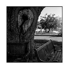 benches • nicosia, cyprus • 2017 (lem's) Tags: benches bancs tree arbre hole trou nicosia nicosie cyprus chypre minolta autocord