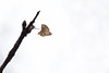 DSCF2107020618 (Evren Unal Photography) Tags: green leaf closeup macro fujifilm outdoor grass plant texture pattern organic text diagonal depth field foliage carlzeiss touit2850m 50mm minimalism ngc blur bokeh branchlet blossom daisy flower fieldgreen sun sunset sunlight alone artnature art nature color colors dof deep natureart minimal minimalist minimalnature minimalart mini red landscape rain black background garden photoadd sunflower vase wood people