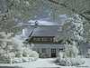 Thatched house (peterkaroblis) Tags: reetdachhaus thatchedhouse infrarot infrared garten garden baum tree
