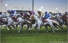 IMG_7023 copy (Services 33159455) Tags: qatar doha horse racing qrec emir horseracing raytohgraphy