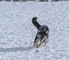 Fetch (Pbreezer) Tags: pets animals fetch dogs