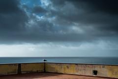 Gabbiano a Castel dell'Ovo (marcopedrini) Tags: napoli naples castello dellovo gabbiano mare golfo cielo nuvole clouds sea