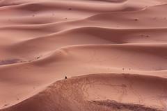 sea of sand (Nicolas Bussieres (Lost Geckos)) Tags: desert sahara morocco dunes