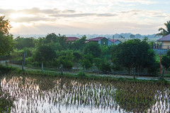 Early Morning In My Home (Mark Pilar) Tags: philippines travel bulacan pi d3200 photography various lovely peace homeland nikon life live enjoy edit culture vacation rice fields water pond reflection trees bush skies sky clouds sunny sun morning rise nature paradie farm farmland breathe