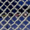 frosty fence (Mika Lehtinen) Tags: frost cold ice pattern mönster is kall kallt staket winter vinter januari