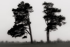 The Downs Monochrome (drjonrees) Tags: bristol monochrome downs canon eos70d england tree