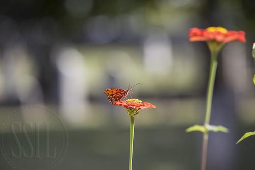 171005-1317-Butterfly