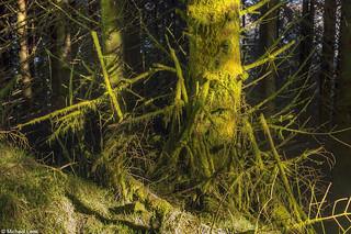 Argyll Forest Park; Strone Hill, Argyll, Scotland