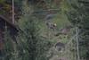 DSC_5267-01 (d90-fan) Tags: österreich austria salzburgerland raurisertal kolmsaigurn herbst alpen nationalpark hirsch hirschkuh hirschbrunft deer animal nature tiere natur
