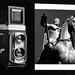 Photo-shot (Mattia Camellini) Tags: weltaflex welta vintagecamera twinlens biottica mediumformat 120rollfilm tmaxkodak400 ilfosol3 biancoenero monochrome mattiacamellini rectan3575mm