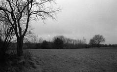 At the edge (Rosenthal Photography) Tags: dezember landschaft ilforddelta3200 bnw asa3200 schwarzweiss zeven olympusom2 kleinbildformat ff135 nordwestring städte bw rodinal125 winter analog 20171203 dörfer siedlungen december mood blackandwhite trees fields edge nature olympus om2 fzuiko zuiko autos 50mm f18 ilford delta delta3200 rodinal 125 epson v800