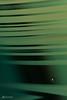 #31 Grüne Streifen (Mitrish) Tags: muster grün streifen wasistdas vase deko photography 365tage 365days makro