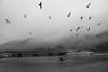 Waddell Creek (Amy ::) Tags: santacruz bigbasin waddellbeach monotone seabirds highway1