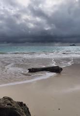 Driftwood 3 (Fletch in HI) Tags: sx60hs canon beach ocean driftwood