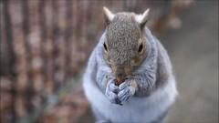 Squirrel sitting on my leg nibbling my nuts (Skyline:)) Tags: squirrel wildlife nature cute animal 7dwf
