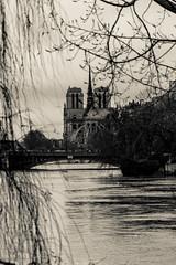 Mise en Seine. Paris, janv 2018 (Bernard Pichon) Tags: paris îledefrance france fr bpi760 seine crue 2018 notre dame fr75