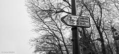 C'est qui le plus fort? (Photographette76) Tags: clamart bois forêt arbres pancartes woods trees roadsign cimetière lycée school street rue cemetery