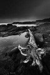 It was a foggy day. (Masako Metz) Tags: driftwood nature landscape seascape blackandwhite monochrome tidepool yachats oregon coast usa america pacific northwest foggy longexposure