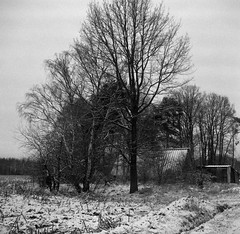Frozen barn (Rosenthal Photography) Tags: ff120 rodinal15020°c21min landschaft 6x6 schwarzweiss anderlingen asa400 feld winter mittelformat rolleirpx400 20180201 städte feldscheune bw februar bnw zeissikonnettar51816 analog dörfer siedlungen landscape nature barn fieldbarn forzen snow mood blackandwhite mediumformat february zeiss ikon nettar 51816 75mm f45 rollei rpx rpx400 rodinal 150 epson v800