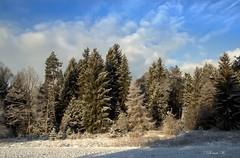 Wintermorgen (explored) (Renata1109) Tags: wald holz baum himmel schnee tannen winter sky snow tree weis blau impressionen spaziergang walking bavaria bayern deutschland germany grün green explore