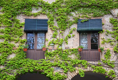 Camouflage (angelsgermain) Tags: façade ivy balconies flowerpots shutters curtains arches stone old traditional masia lescols restaurant olot lagarrotxa catalonia catalunya
