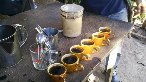 Thailand-Chiang Mai-Coffe platation-IMG_20180118_141142