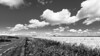 ile 2018-27 (Tasmanian58) Tags: grass field wheat clouds sky road trail herb nikon nikor d610 landscape summer orleansisland quebec canada