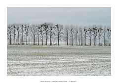natural decoration (Tho. Z) Tags: schönfelderhochland dresden sachsen germany winter trees snowy mistel viscumalbum bäume schnee dotted dots landscape landschaft пейзаж ландшафт soft mild branches