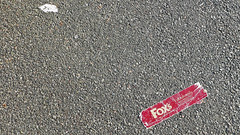 fox (The tamed shrew) Tags: walk stornoway fox paper waste pavement grey red
