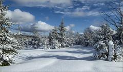 Ein Wintertag im Bayerischen Wald / A winter's day in the Bavarian Forest (ludwigrudolf232) Tags: winter