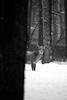 PIO_2091M-02 (MILESI FEDERICO) Tags: milesi milesifederico montagna montagne piemonte piedmont italia italy iamnikon alpi alpicozie visitpiedmont valsusa valdisusa valliolimpiche valledisusa nikon nikond7100 nital d7100 dettagli details 2018 inverno winter snow neve nevicata neige bianconero bw biancoenero blackandwhite blackwhite monocromatico natura nature nat wild wildlife cervo bosco mammifero