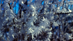 Got Frost ? (Bob's Digital Eye) Tags: bobsdigitaleye bokeh canon depthoffield ef50mmf18ii flicker flickr frost hoarefrost macro march2018 snow t3i winter wintercolour winterinmn h2o laquintaessenza