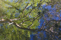 Impressionist reflections (setoboonhong) Tags: nature outdoor tree reflections sky victorian gardens melbourne impressionist abstract colours blur bokeh